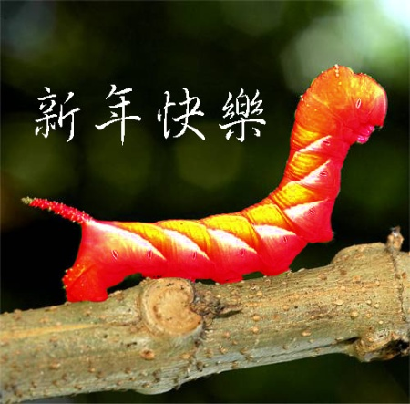 Worm avator Chinese New Year Resized